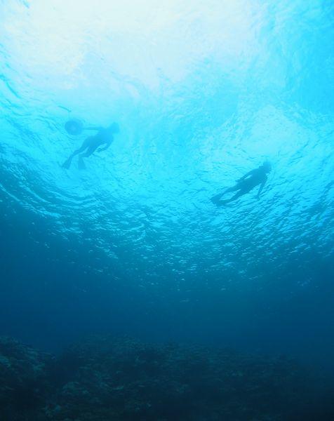 深い場所は空を飛んでいる気分でシュノーケルできます。