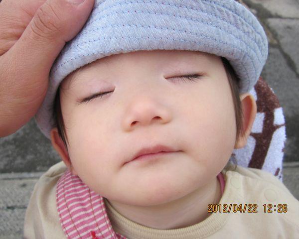 桃子。爆睡中