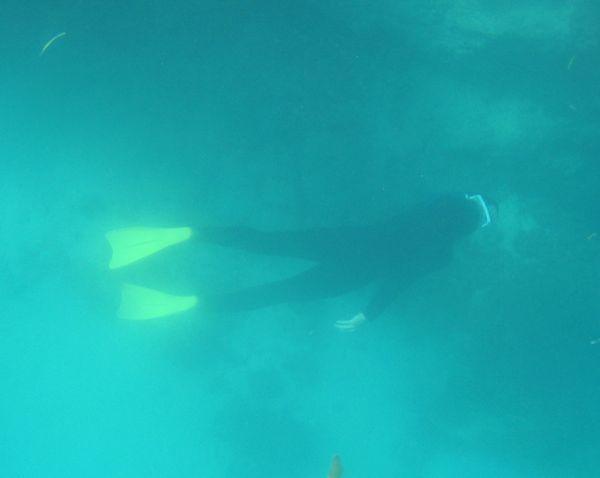 巣もぐり、水深7m前後