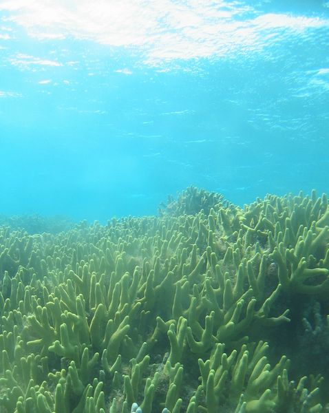 透明度抜群の海でした