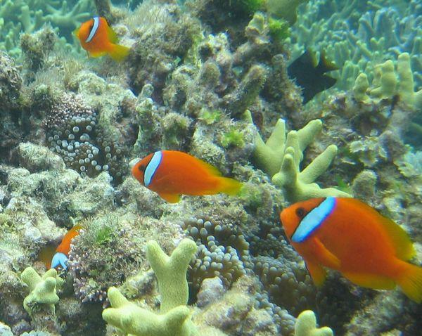 干潮時間帯はサンゴと魚ととても近い!