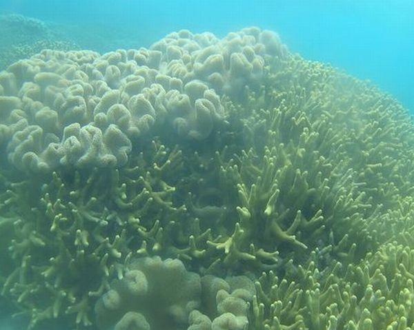 ハードコーラルとソフトコーラルが織り成すサンゴ群落