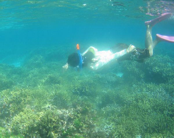 透明度抜群のサンゴをシュノーケル