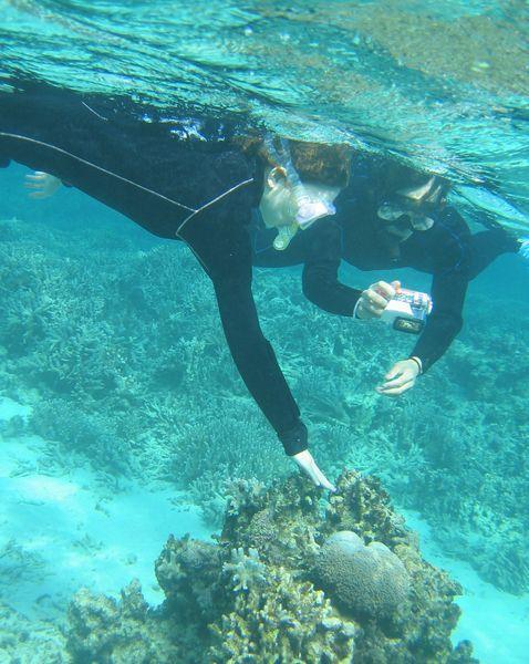 サンゴを観察中