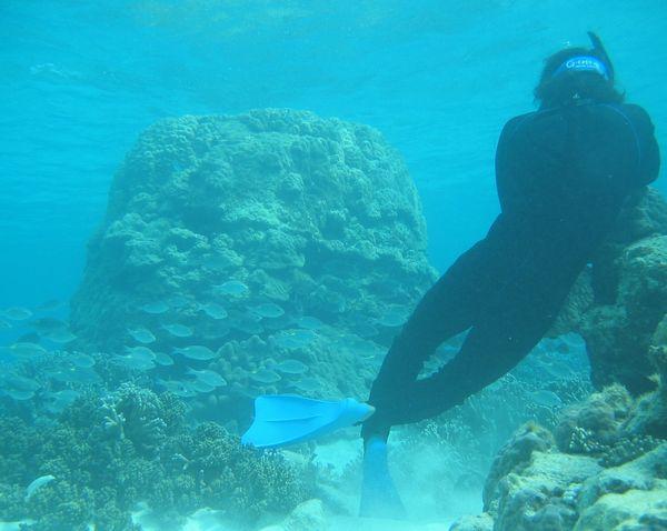 水中でノコギリダイの群れを撮影中