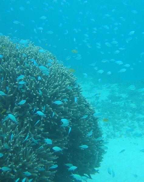 サンゴと魚のバランスが大切