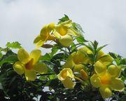 黄色いお花。きれいです。