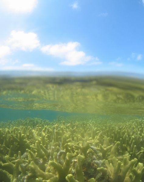 サンゴと空。両方キレイです