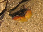 砂に隠れているカニさん