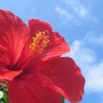 そうだ!石垣島に旅行、観光に行こう!と思ったときの事前準備のまとめ