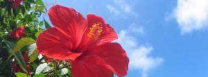 石垣島旅行、観光をする際の事前準備ブログのまとめ