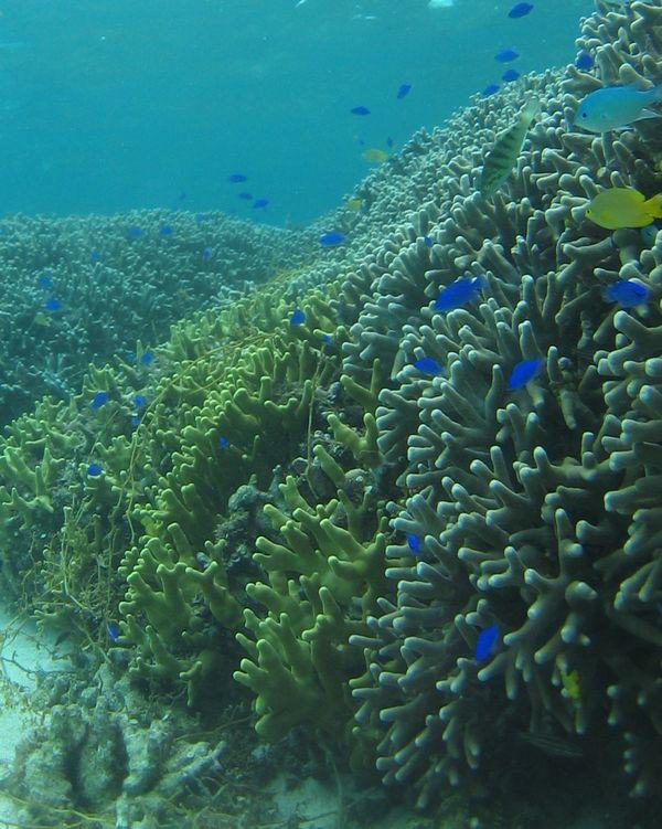サンゴはぴか一