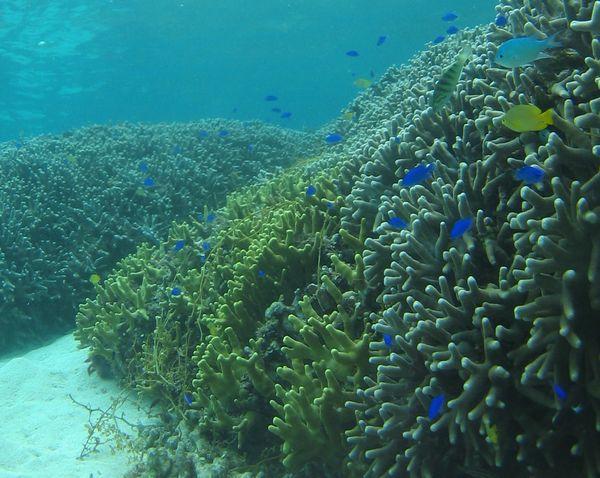 海は好奇心を満たす場所