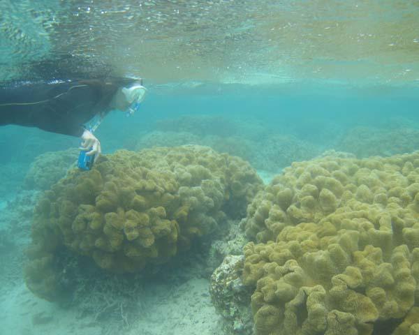 サンゴがすぐ目の前