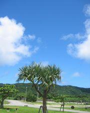 本日も快晴の石垣島です