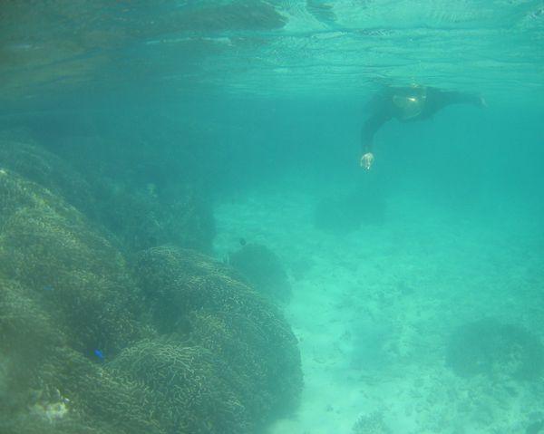 白保のアオサンゴ群落