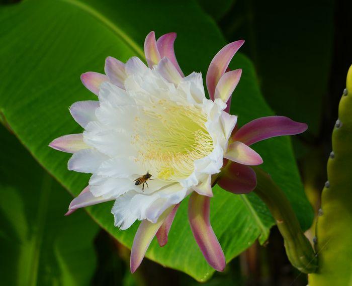 花には、ハチさんも登場です