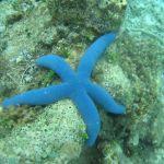 海の得体の知れない生物達
