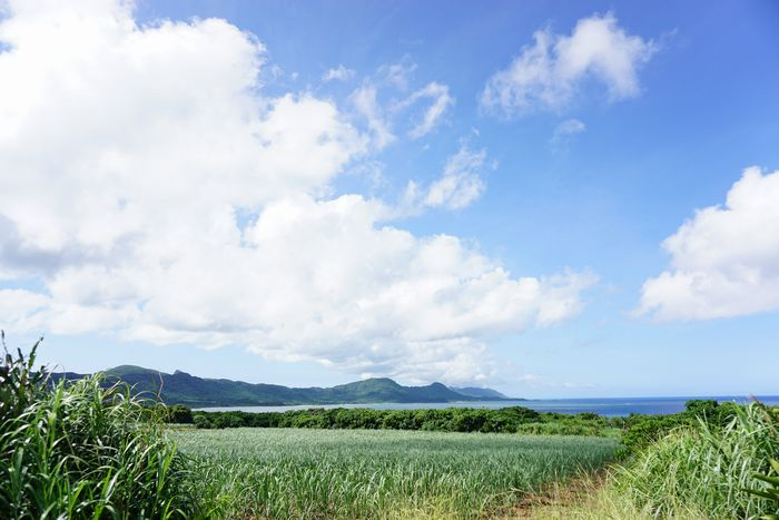 さとうきび畑と石垣島の風景