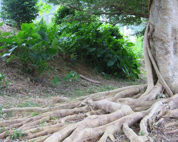 亜熱帯気候が織り成すジャングルのような植物