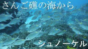 半年ぶりの石垣島旅行!シュノーケリングに洞窟探検ツアー
