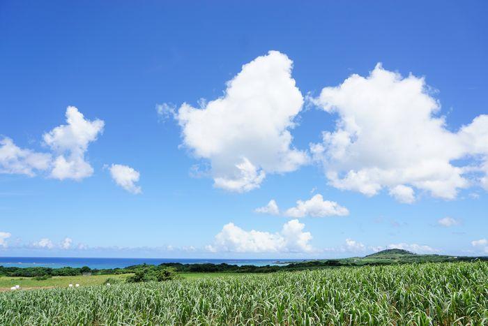 農道からの景色