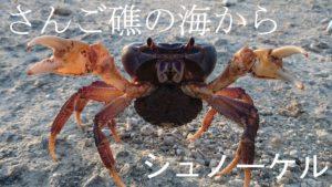 荒波シュノーケリングツアー!さらにギアアップの石垣島の海です!