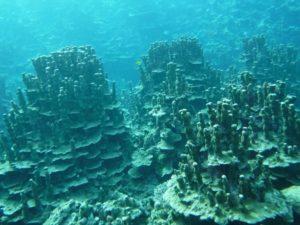 まるでアンコールワット?パラオハマサンゴ 石垣島のシュノーケリングポイント紹介ブログ。