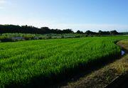 石垣島の歴史年表ブログ