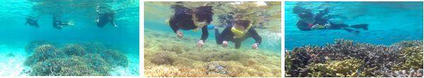 冬の石垣島は透明度抜群です