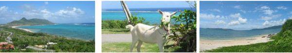 石垣島の風景4
