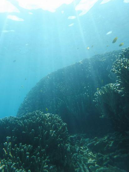 水中は、光のカーテンで神々しいです