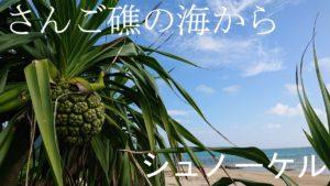 石垣島を初シュノーケリング!ゆったりのんびり楽しみました!